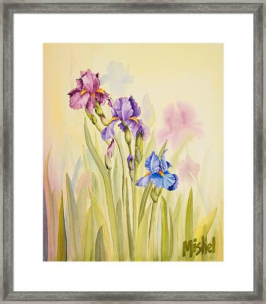Iris Garden Ll Framed Print