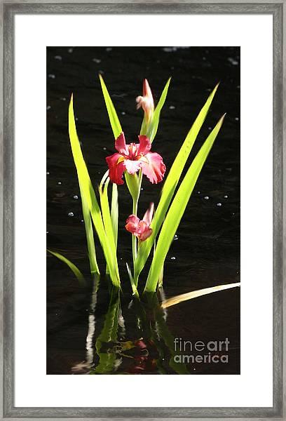 Iris In Water Framed Print