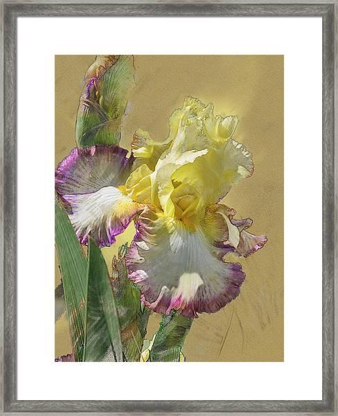Iris, 'kiss Of Kisses' Framed Print