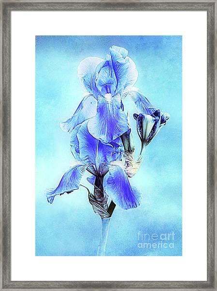 Iris Pair In Blue Framed Print