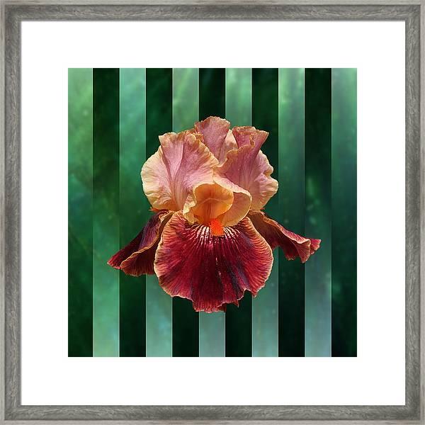 Iris Unleashed Framed Print