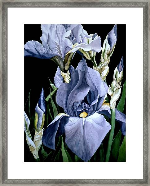 Irises In Blue Framed Print