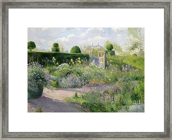 Irises In The Herb Garden Framed Print