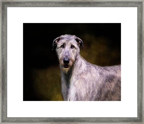 Irish Wolfhound Portrait Framed Print