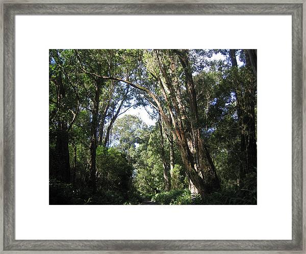 Ironwood Framed Print by Charles  Jennison