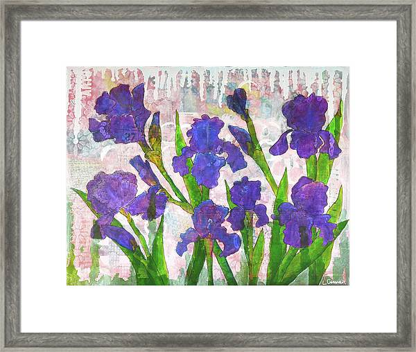 Irresistible Irises Framed Print