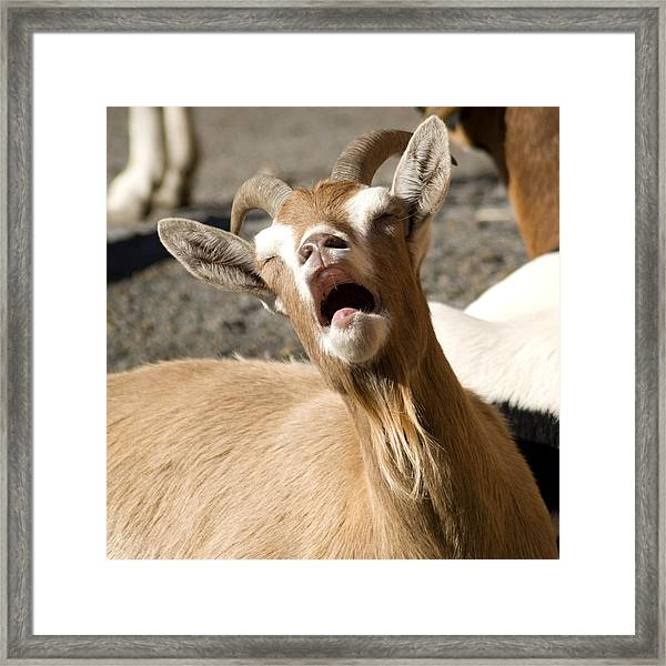 Is It Monday Already Framed Print