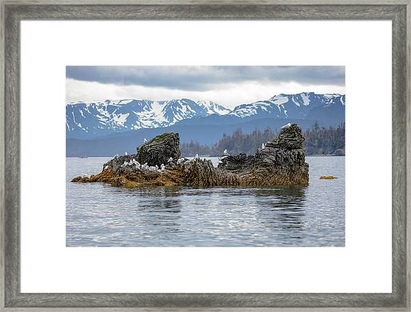 Island With Gulls Framed Print