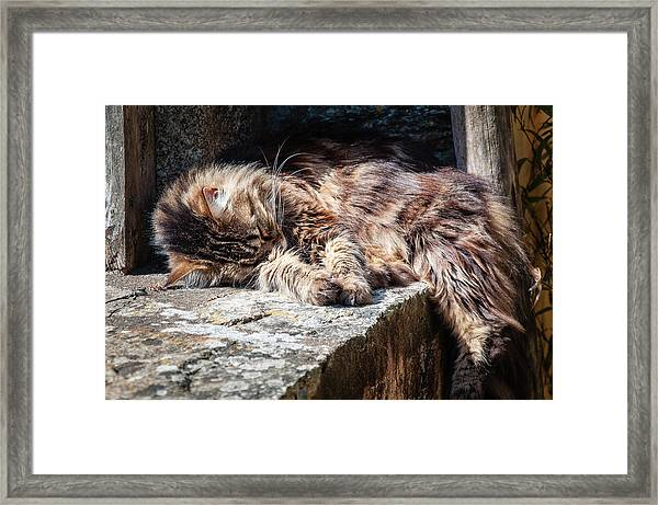 It's A Hard Life Framed Print