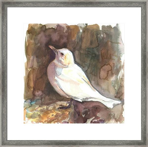 Ivory Gull Framed Print