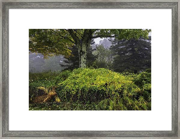 Ivy Garden Framed Print