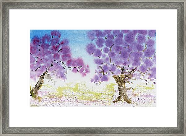 Jacaranda Trees Blooming In Buenos Aires, Argentina Framed Print