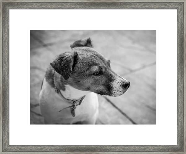Framed Print featuring the photograph Jack Russell by Nick Bywater
