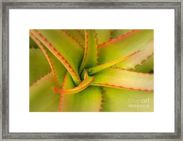 Jagged Aloe Framed Print