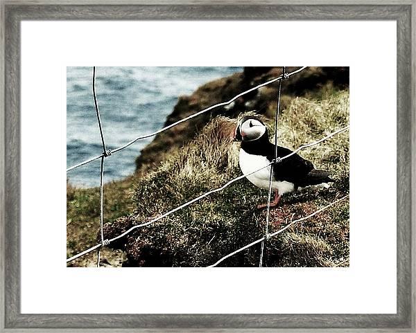 Jailbird Framed Print by HweeYen Ong