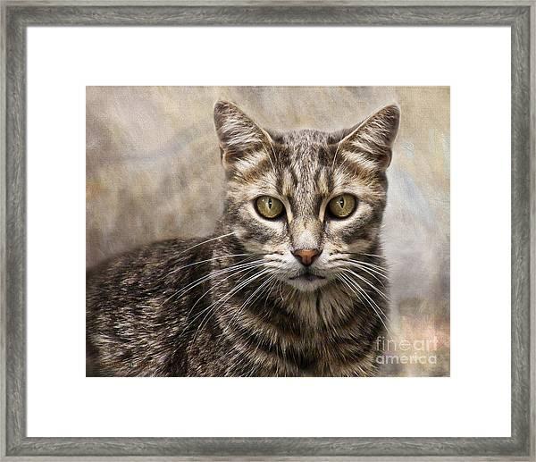 Janie's Kitty Framed Print