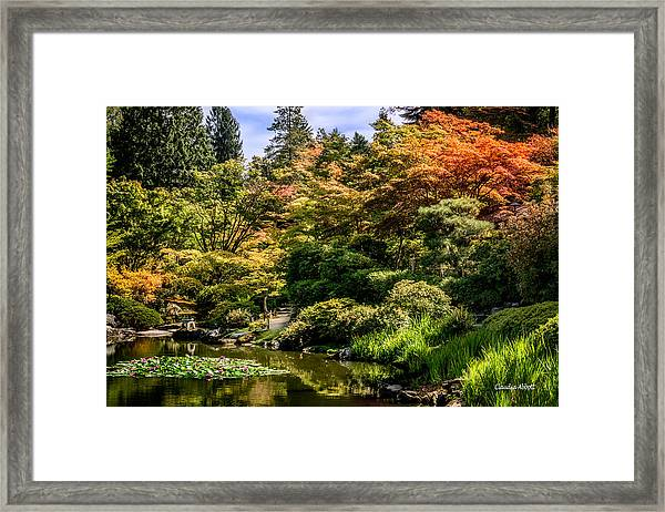 Framed Print featuring the photograph Japanese Gardens Seattle by Claudia Abbott
