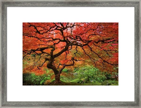 Japenese Garden, Portland Framed Print