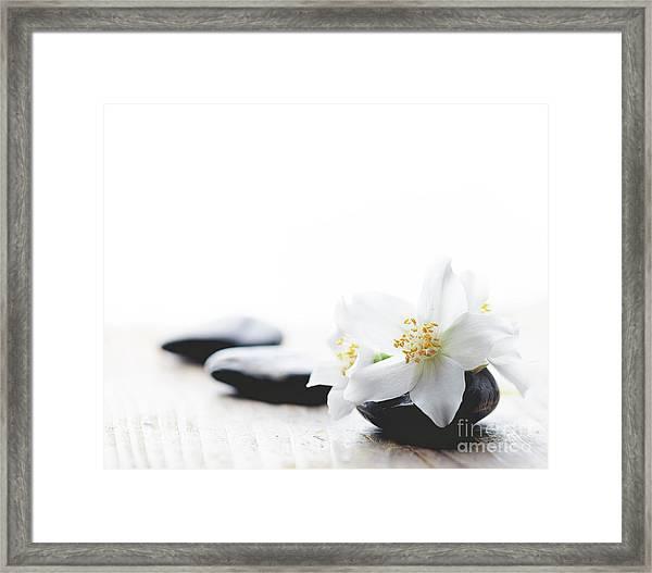 Jasmine Flower On Spa Stones Framed Print