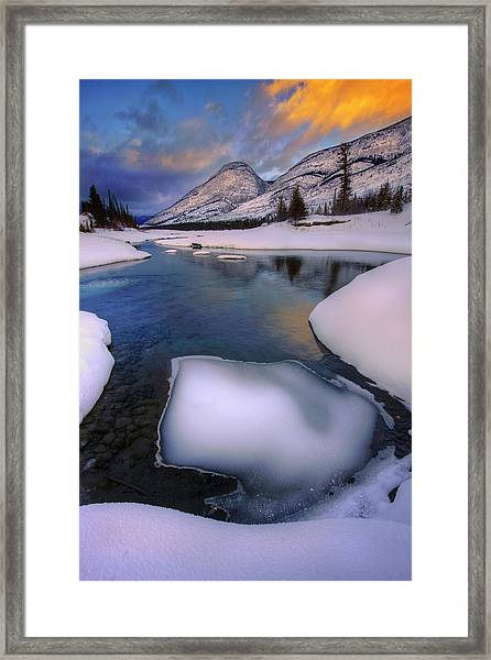 Jasper In The Winter Framed Print