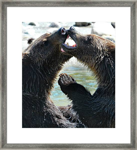 Jaws And Claws Framed Print