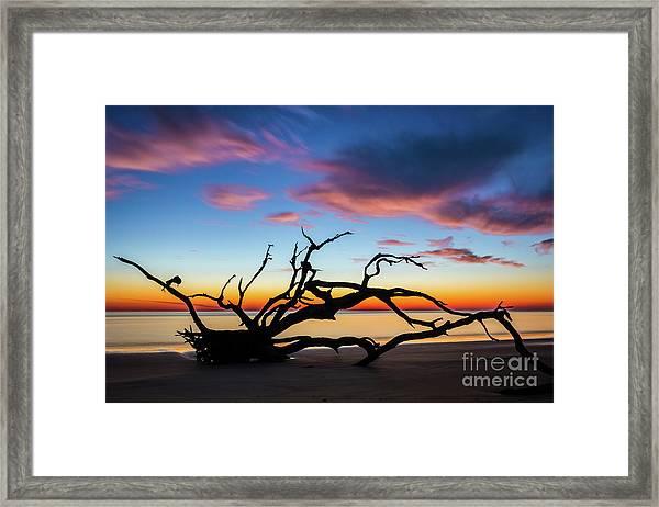 Jekyll Island Sunrise On Driftwood Beach Framed Print