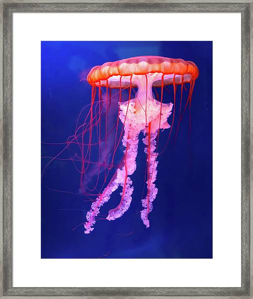 Jellyfish Framed Print