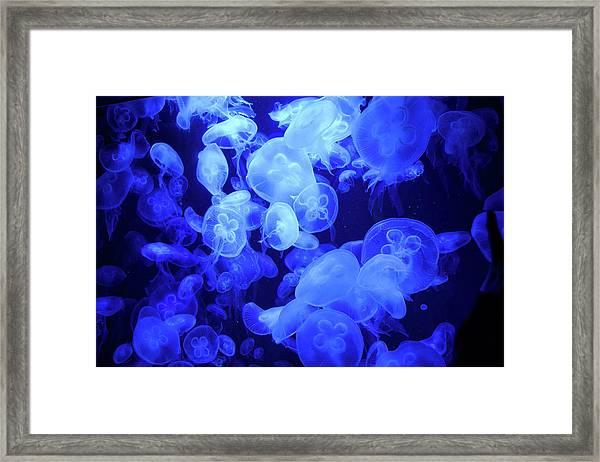 Jellyfish Framed Print