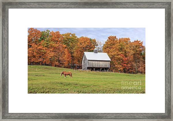 Jericho Hill Vermont Horse Barn Fall Foliage Framed Print