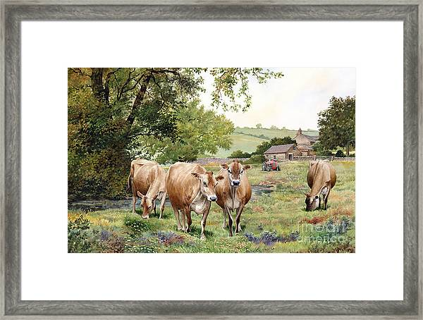Jersey Cows Framed Print