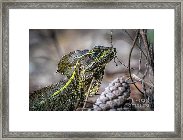 Framed Print featuring the photograph Jesus Lizard #2 by Tom Claud