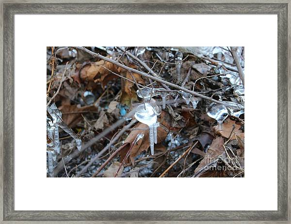 Jewel Of Winter 1 Framed Print