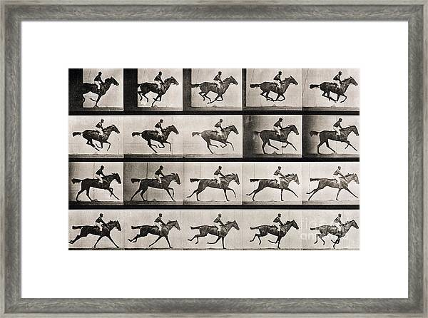 Jockey On A Galloping Horse Framed Print