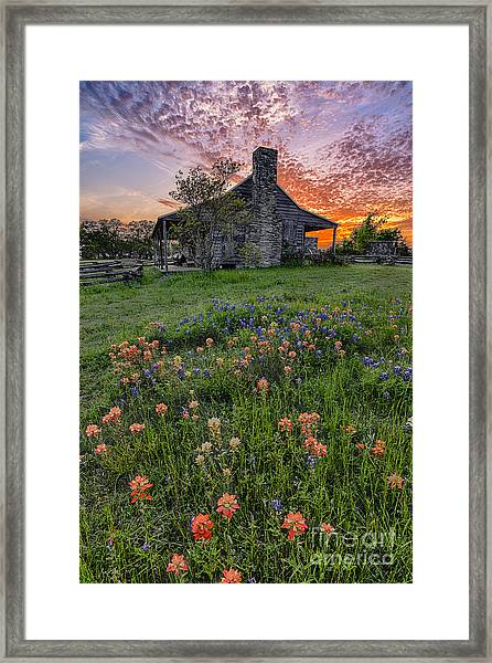 John P Coles Cabin And Spring Wildflowers At Independence - Old Baylor Park Brenham Texas Framed Print