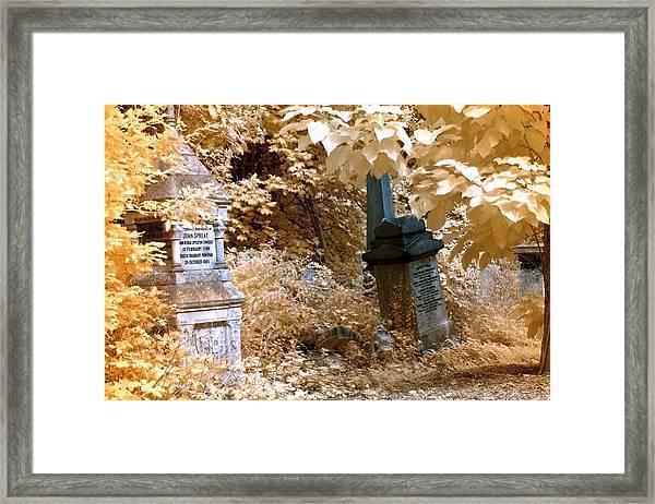 Autumnal Walk At Abney Park Cemetery Framed Print