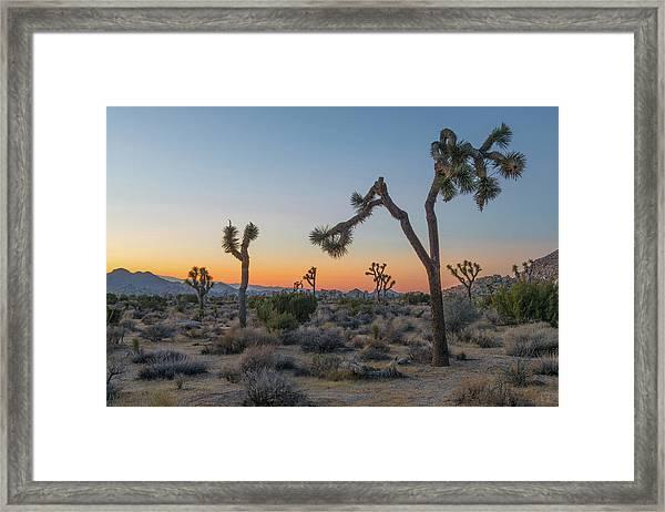 Joshua Sunset Framed Print