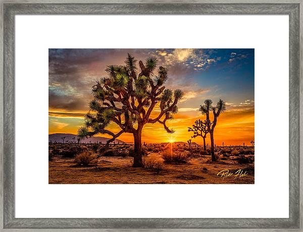 Joshua Tree Glow Framed Print