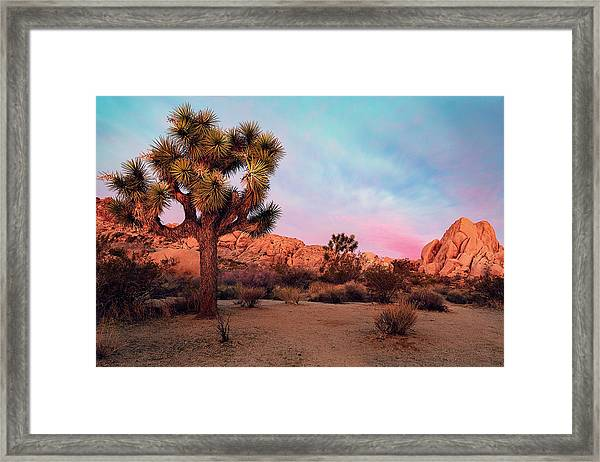 Joshua Tree With Dawn's Early Light Framed Print
