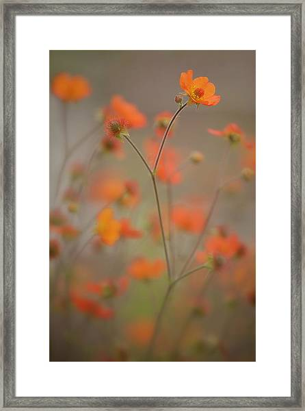 Joy Dance Framed Print