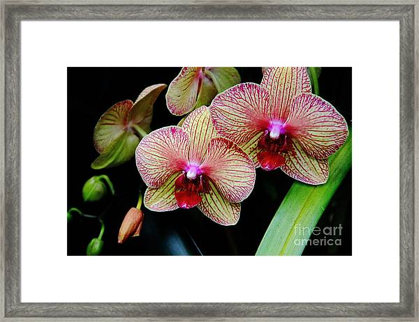 Joy Within Framed Print