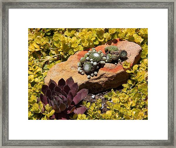 Joyful Living In Hard Times Framed Print