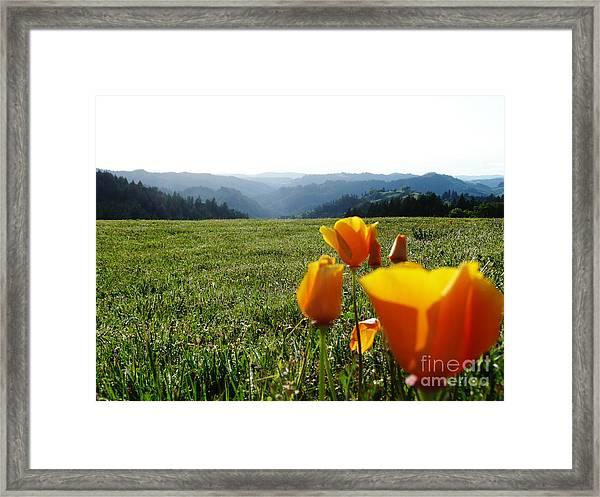 Jubilant Poppies Framed Print by JoAnn SkyWatcher