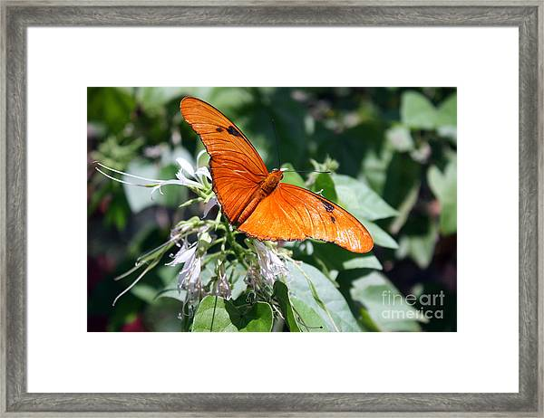 Julia Butterfly Framed Print