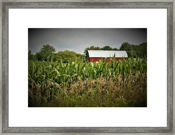 0020 - July Corn Framed Print