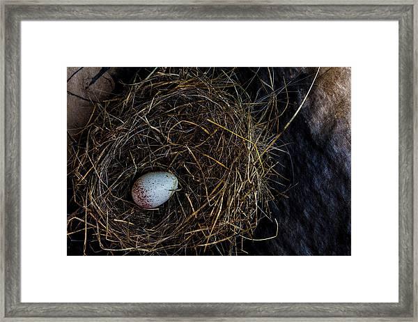 Junco Bird Nest And Egg Framed Print