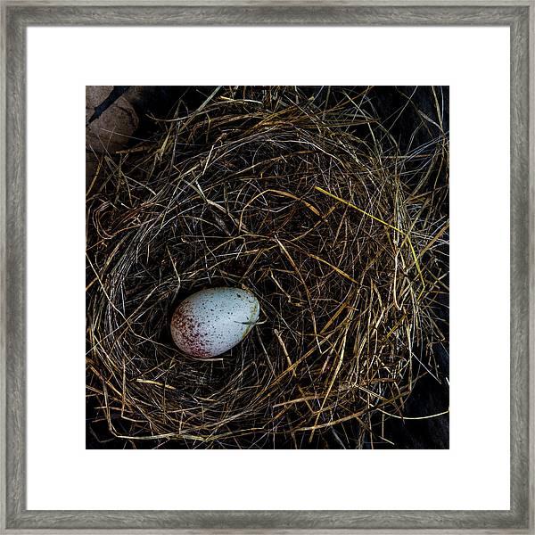 Junco Bird Nest And Egg Square Version Framed Print