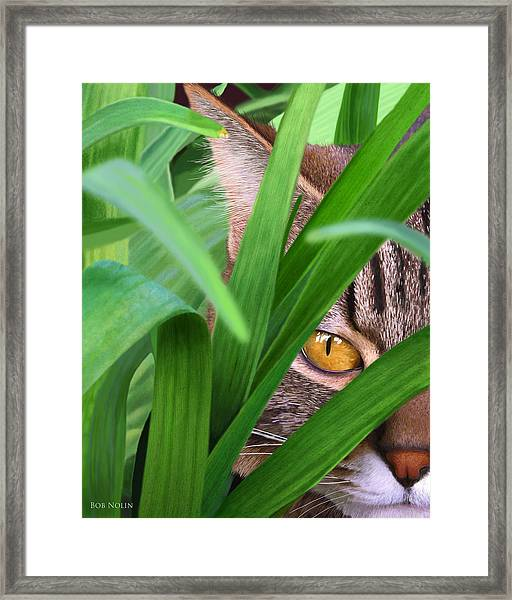 Jungle Cat Framed Print by Bob Nolin