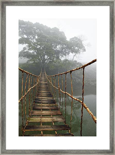 Jungle Journey 2 Framed Print