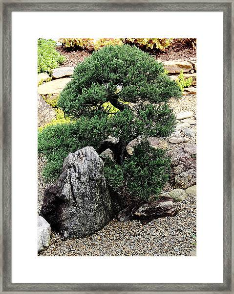 Juniper Framed Print