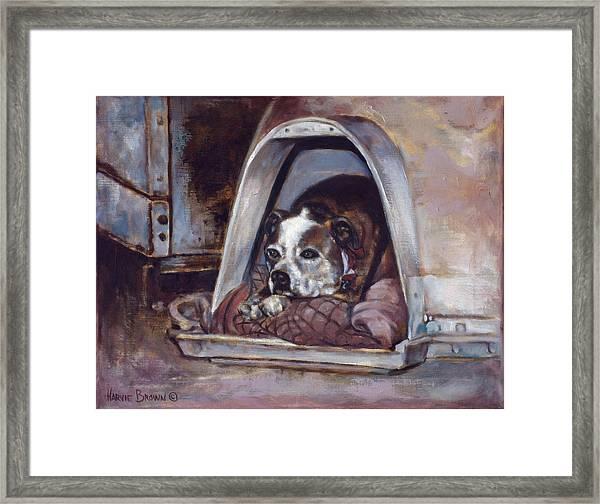 Junkyard Dog Framed Print